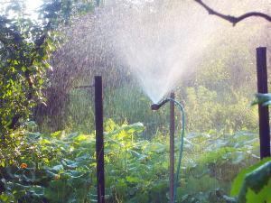 Полуавтоматическая поливочная система для огорода