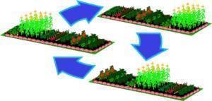 Севооборот на огороде оптимальное чередование растений