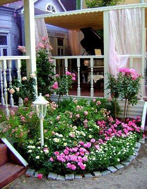 Рабатка с розами