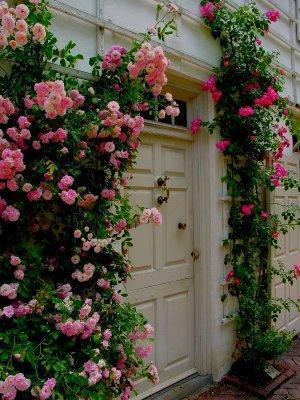 Дизайн живой изгороди из роз