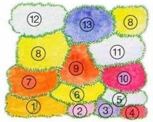 Схема посадки растений для клумбы