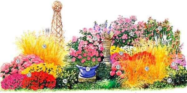 схема клумбы из многолетних цветов осенью