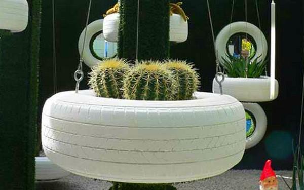 кактусы в колесе