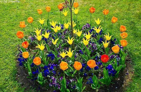 круглая цветочная клумба