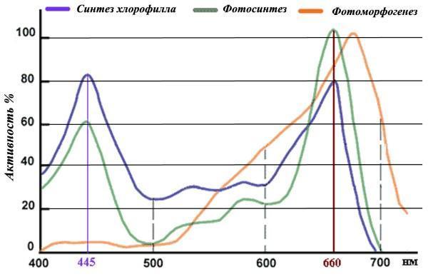 График эффективности спектра для рассады