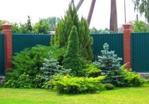 Схемы клумб с хвойными растениями