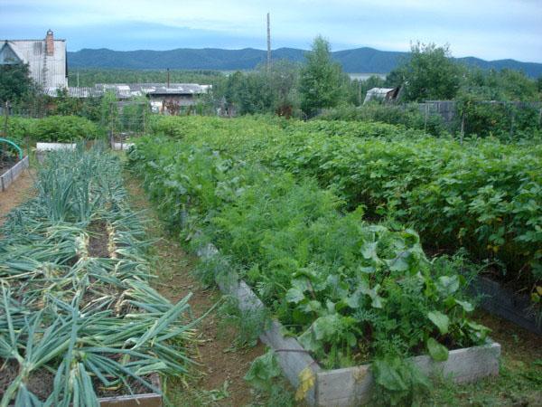 огород по Курдюмову
