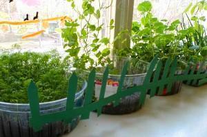 мини-огород на подоконнике