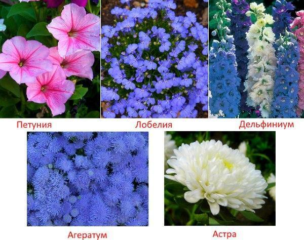 цветы с фото