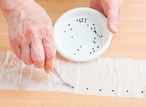 семена на туалетной бумаге