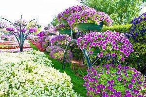 Наиболее популярные сорта и виды петуний для посадки на участке и дома 646