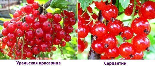 Уральская красавица и Серпантин