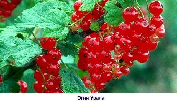 Огни Урала - фото