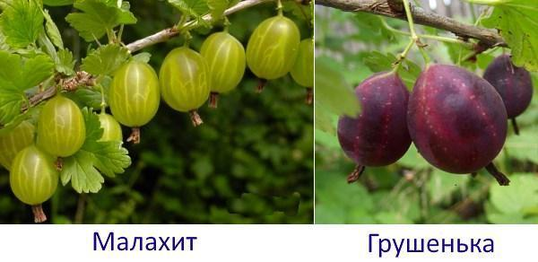Малахит и Грушенька