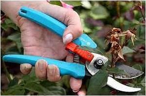 обрезка садовыми ножницами