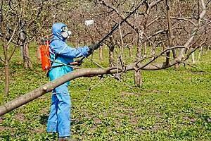 урожай плодовых деревьев