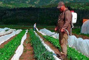 Химические вещества для борьбы с капустной молью