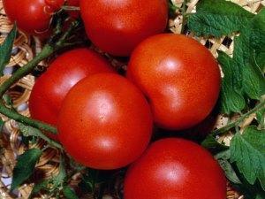 На фото сорт помидор Невский