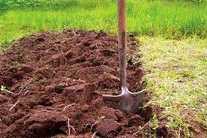 перекопка земли для малины