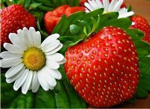 ягода и цветок