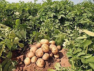 Комбинированный способ выращивания