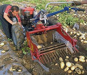 Копаем картофель мотоблоком