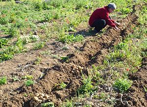 Сбор урожая на хранение