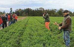 Хороший урожай ранней моркови
