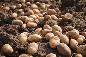 Хороший урожай - результат правильного ухода