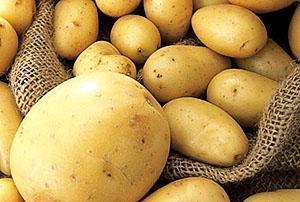 Качественный урожай картофеля