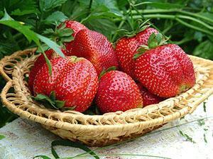Крупная спелая ягода
