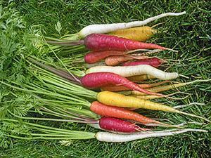 Многоцветный урожай дачника