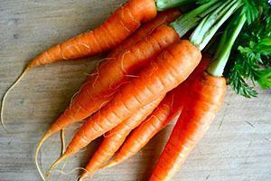 Морковь после проведения яровизации семян