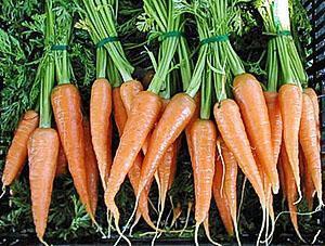 Морковь на продажу
