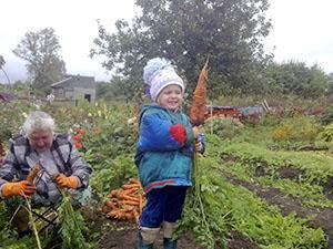 Щедрый урожай