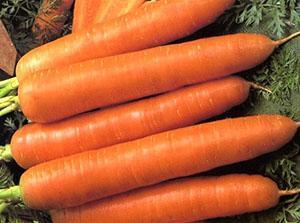 Морковь сорта Тушон