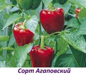 Сорт Агаповский