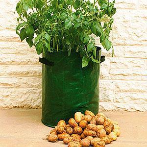 Урожай картофеля в мешке