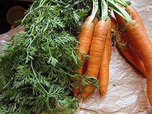 Когда сеять морковь по лунному календарю