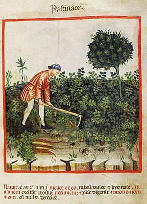 Выращивание моркови в древние времена