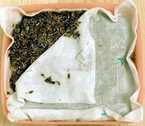 Замачивание семян