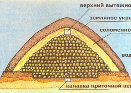 Хранение картофеля в буртах