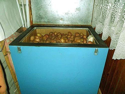 Картофель в ящике на балконе