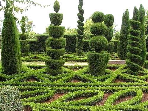 Ландшафтный дизайн с использованием самшита