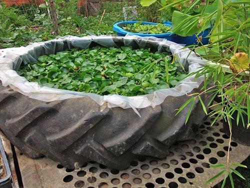 Маленький пруд с гиацинтами в саду