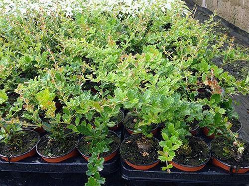 Молодые растения из семян