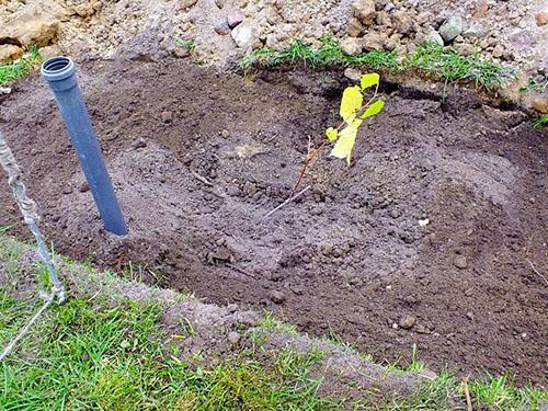 Обеспечение правильного полива корневой системы винограда