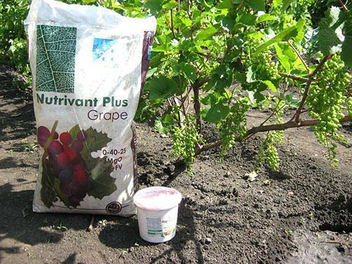 Удобрение винограда летом