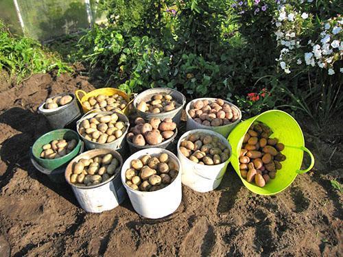 Урожай с ухоженного огорода