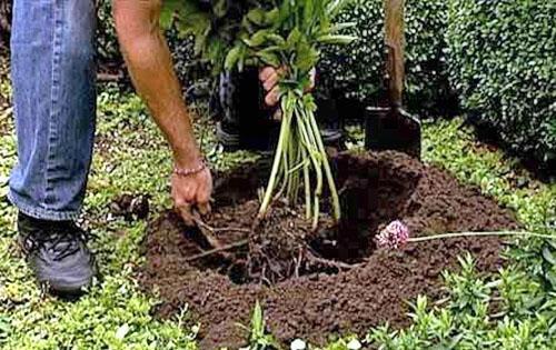 Жидкая подкормка растения